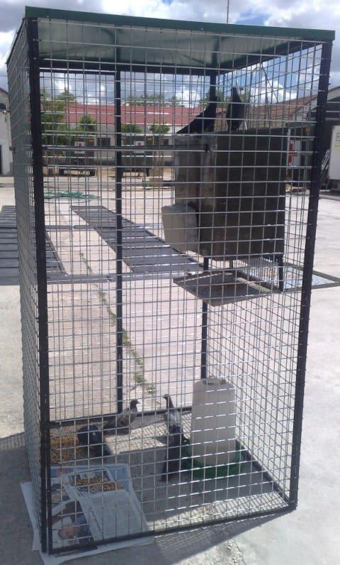 jaula captura palomas