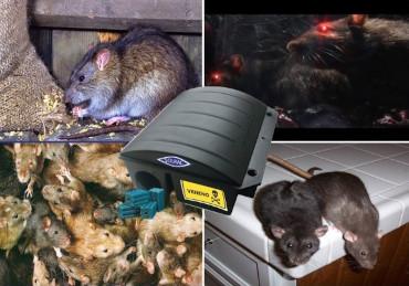 desratización de ratas y ratones
