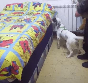 perro detector de chinches