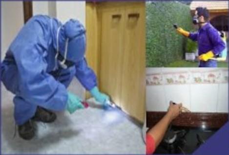 tratamiento plaga insectos